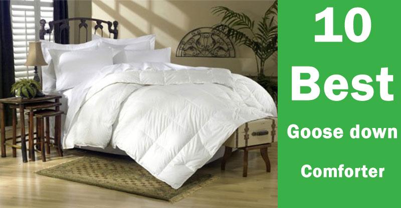 10 goose down comforter
