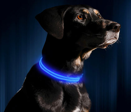 LED Dog Collar, USB Rechargeable