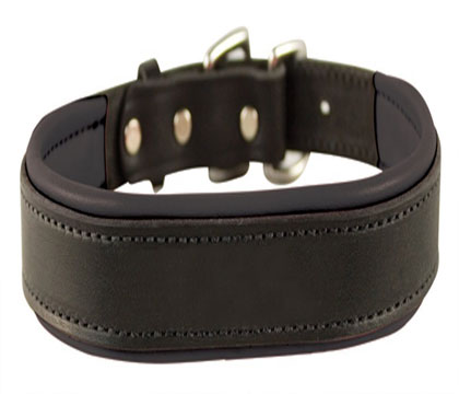Perri's Padded Leather Dog Collar