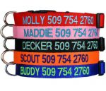 Personalized Dog ID Collar